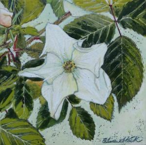 Rosa Kew Gardens Painting